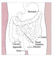 Over Colon Cleansing Procedures