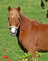 Equine Assisted Therapy Programma